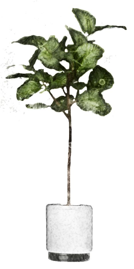 zimmerpflanze - Internetagentur